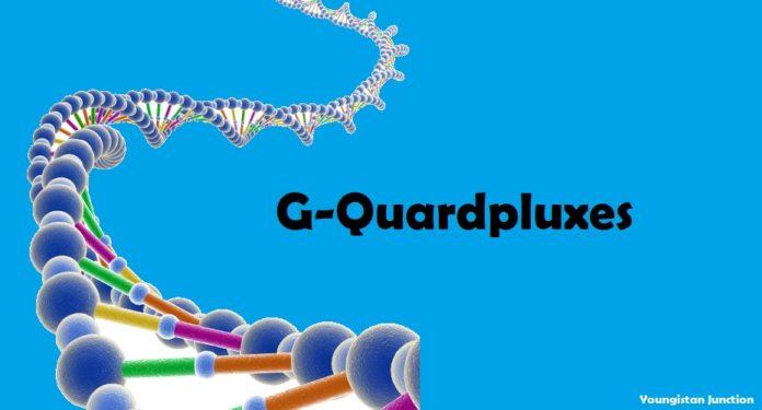 What is G-Quadruplexes